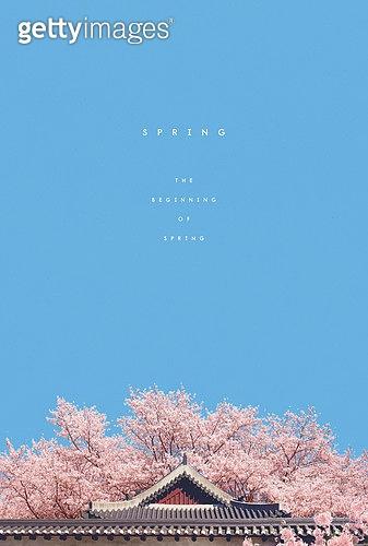 계절, 봄, 백그라운드, 풍경 (컨셉), 하늘, 벚꽃, 꽃, 한옥