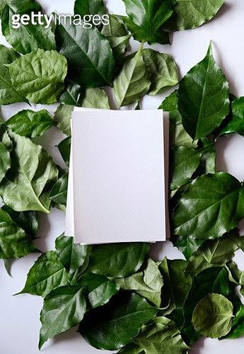 사진, 탑앵글 (카메라앵글), 프레임, 봄, 잎 (식물부분), 녹색 (색)