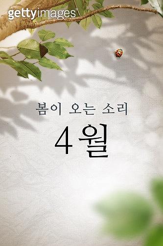 모바일백그라운드, 문자메시지 (전화걸기), 봄, 4월, 나무