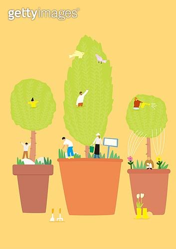 화분, 식물, 반려식물, 원예 (레저활동), 봄, 율마