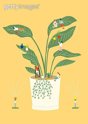 화분, 식물, 반려식물, 원예 (레저활동), 봄, 극락조, 여인초