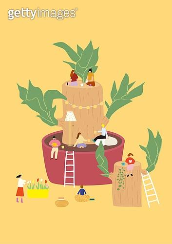 화분, 식물, 반려식물, 원예 (레저활동), 봄, 행운목, 사다리