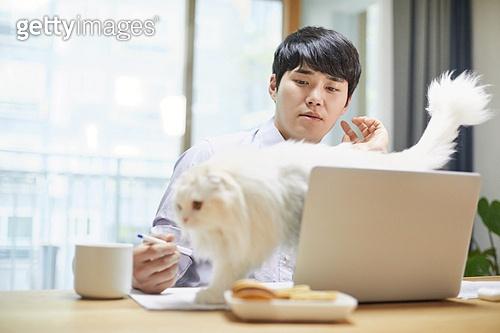 재택근무, 재택근무 (원격근무), 사회적거리두기, 사회적거리두기 (사회이슈), 격리, 비대면 (사회이슈), 자가격리, 고양이 (고양잇과), 반려동물 (길든동물)
