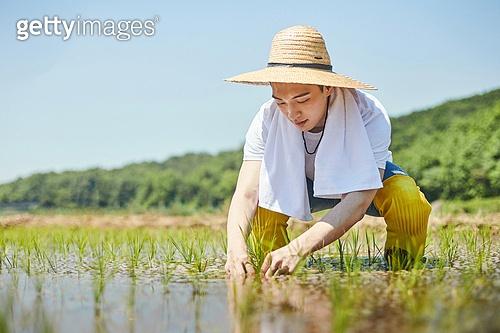 귀농, 시골풍경 (교외전경), 농업, 농업활동, 농부 (농촌직업), 농업 (주제), 모내기, 모내기 (농업), 논