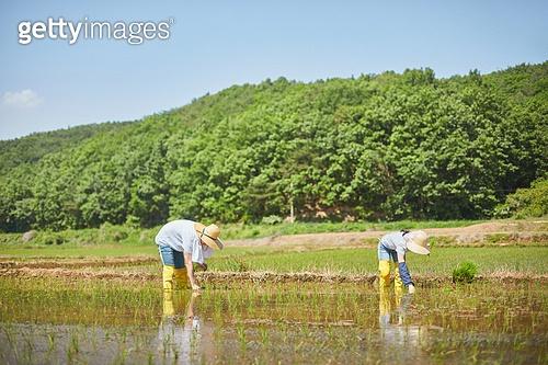 귀농, 농업, 농부 (농촌직업), 농업 (주제), 모내기, 벼, 모내기 (농업)