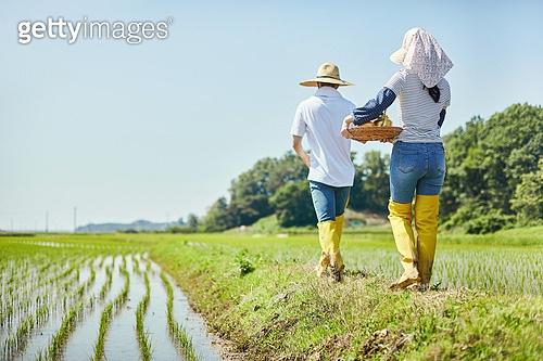 귀농, 시골풍경 (교외전경), 농부 (농촌직업), 농업 (주제), 벼, 시골풍경