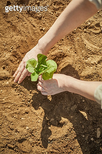 채소밭, 농업 (주제), 흙, 심기 (움직이는활동), 식목일