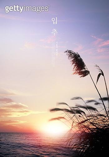 가을, 풍경 (컨셉), 계절, 감성, 추억, 자연풍경, 일출, 갈대