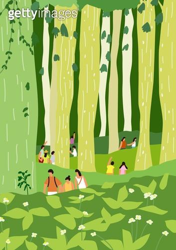 풍경 (컨셉), 자연 (주제), 제주도 (대한민국), 사려니숲길 (제주시), 숲, 나무