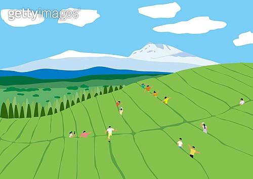 풍경 (컨셉), 자연 (주제), 제주도 (대한민국), 도순다원, 차재배 (농작물)