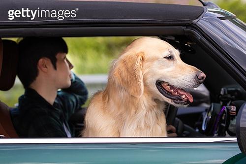 남성, 자동차, 운전 (움직이는활동), 여행, 반려동물 (길든동물)