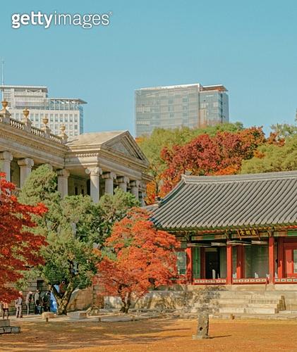 가을, 단풍나무 (낙엽수), 한국고궁, 대한민국 (한국), 덕수궁 (서울), 여행지 (여행)