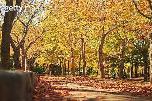 가을, 단풍나무 (낙엽수), 가을 (계절), 11월, 서울 (대한민국), 단풍길, 낙엽, 단풍철 (가을), 단풍잎 (잎)