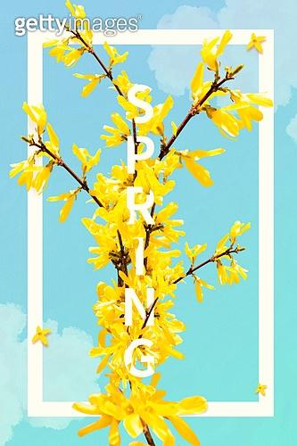 봄, 꽃, 프레임, 개나리, 하늘
