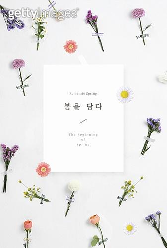 봄, 꽃, 식물, 종이