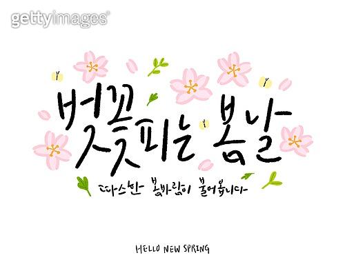 캘리그래피 (문자), 손글씨, 봄, 상업이벤트 (사건), 꽃, 잎, 벚꽃