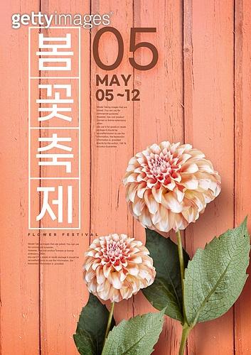꽃, 축제 (엔터테인먼트), 포스터, 계절, 달리아 (온대성꽃)