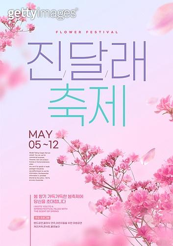 꽃, 축제 (엔터테인먼트), 포스터, 계절, 진달래, 꽃잎