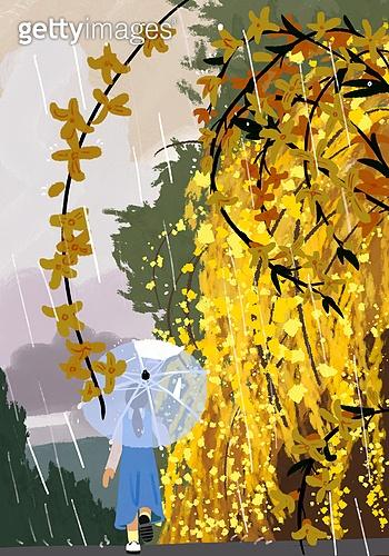 봄, 비 (물형태), 풍경 (컨셉), 자연, 녹색 (색), 개나리