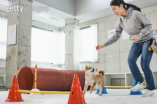 여성, 강아지, 반려동물 (길든동물), 훈련, 도그워커 (직업), 시바이누 (순종개)