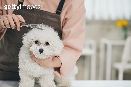강아지, 반려동물 (길든동물), 애견미용사, 자르기 (움직이는활동), 털 (동물가죽), 펫케어