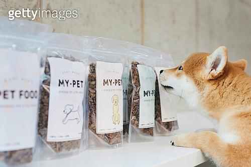 강아지, 펫푸드 (애완동물장비), 포장, 상품 (인조물건), 냄새 (감각사용)
