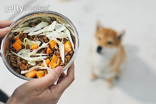 강아지, 기다림, 개사료, 건강식, 사람손 (주요신체부분)