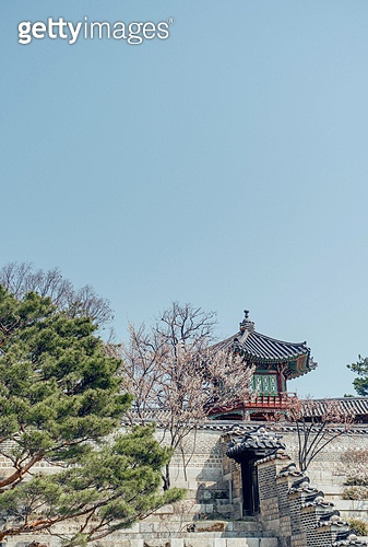 사진, 봄, 매화꽃, 한국문화 (세계문화), 한국고궁, 창경궁, 여행, 전통문화 (주제), 한옥 (한국전통), 백그라운드 (주제)