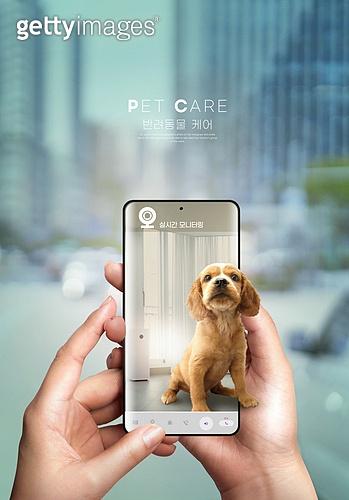 반려동물, 인공지능, 펫케어, 실내, 스마트폰, 감시 (컨셉), 코커스패니얼