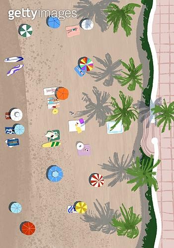 풍경 (컨셉), 여름, 계절, 바다, 휴양지, 해변 (해안), 탑앵글 (카메라앵글), 야자나무 (열대나무), 해변