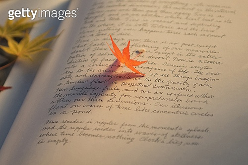 단풍잎,문자,식물,실내,영어,잎,정물,책,독서,교육,클로즈업,탑앵글