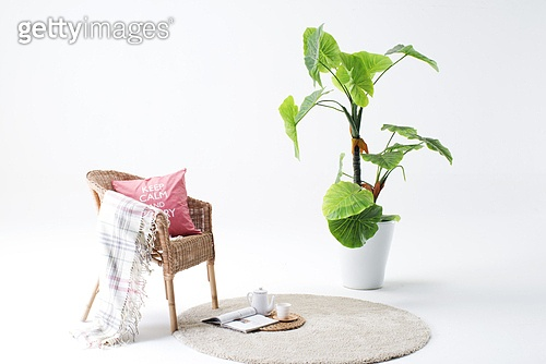 나무,누끼,담요,식물,실내,음료,음식,의자,잔,정물,찻잔,차,잔,책,독서,교육,카펫,쿠션,클로즈업,화분,흰색,배경