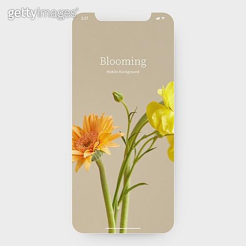 그래픽이미지, 목업, 백그라운드 (주제), 꽃, 배경화면