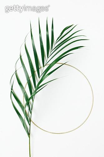 식물, 여름, 잎 (식물부분), 프레임, 야자잎