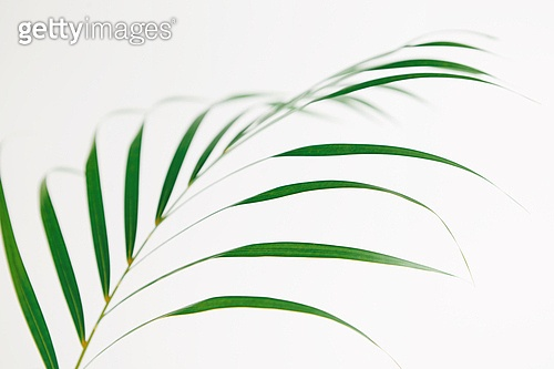 스틸라이프 (콤퍼지션), 식물, 여름, 잎 (식물부분),