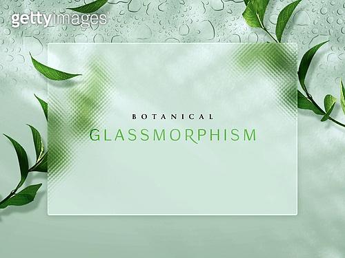 백그라운드, 글래스모피즘, 식물학 (주제), 유리, 투명 (비침), 깨끗함 (좋은상태), 프레임, 야자잎