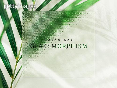 백그라운드, 글래스모피즘, 식물학 (주제), 유리, 투명 (비침), 깨끗함 (좋은상태), 프레임, 야자잎, 아레카야자