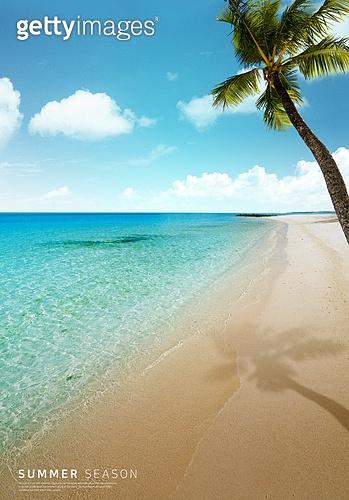 바다, 해변, 풍경 (컨셉), 시원함 (컨셉), 카피스페이스 (콤퍼지션), 여름, 야자나무