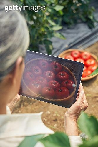 전자상거래, 스마트팜, 모바일쇼핑, 디지털태블릿 (개인용컴퓨터), 농부 (농촌직업), 채소, 산지직송 (배달), 농업 (주제), 실버라이프, 디지털 (기술)