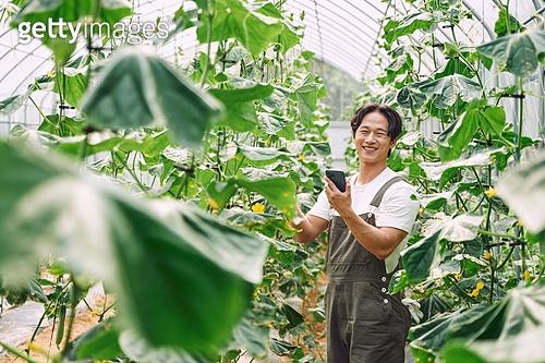 농부 (농촌직업), 채소, 산지직송 (배달), 농업 (주제), 채소밭 (경작지), 스마트기기 (정보장비), 경작 (식물속성), 귀농
