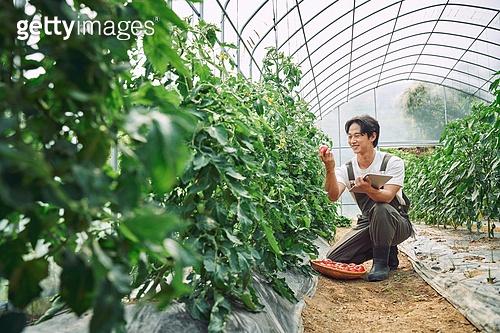 농부 (농촌직업), 채소, 산지직송 (배달), 농업 (주제), 채소밭 (경작지), 경작 (식물속성), 귀농