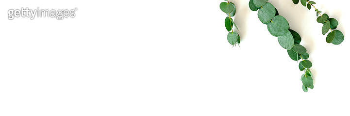 Header with frame made of eucalyptus branches on a white background.