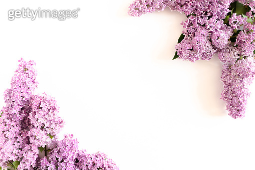 Border frame made of lilac flowers on a white background