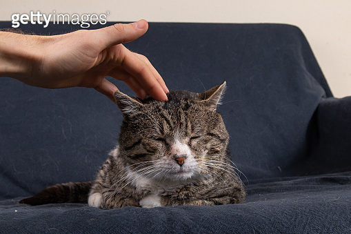 Close up of Unrecognizable man caressing old cat