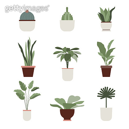 Home plants and flowers Vector icons set in flat design