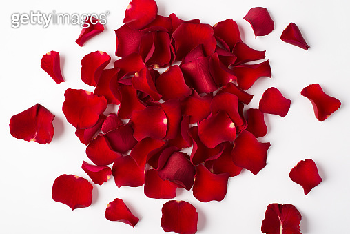 Photo overhead of roses and petals isolated on the white background