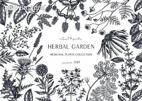 Hand drawn herbal plants banner.