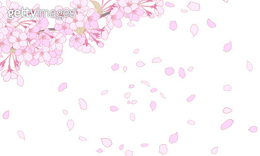 This is a background illustration of cherry blossoms in full bloom.