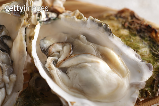 Oysters with shells of winter taste