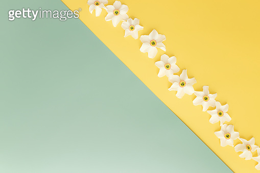 Summertime concept on yellow and green background with flower heads of daffodil